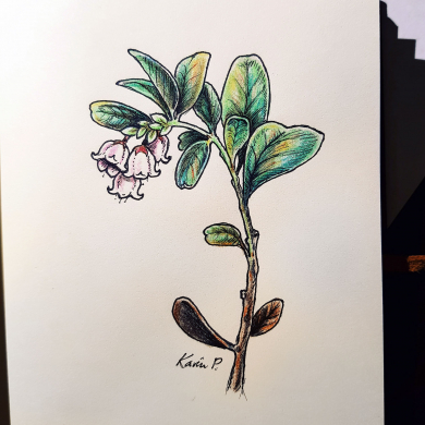 Inktober 2017 - lingonberry flower