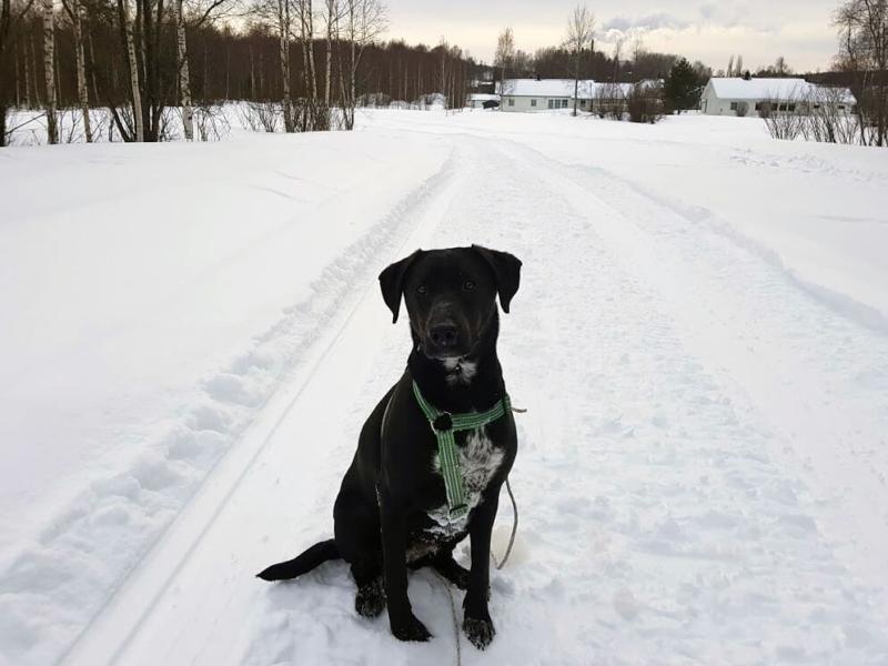 My dog Runa sitting in a snowy field