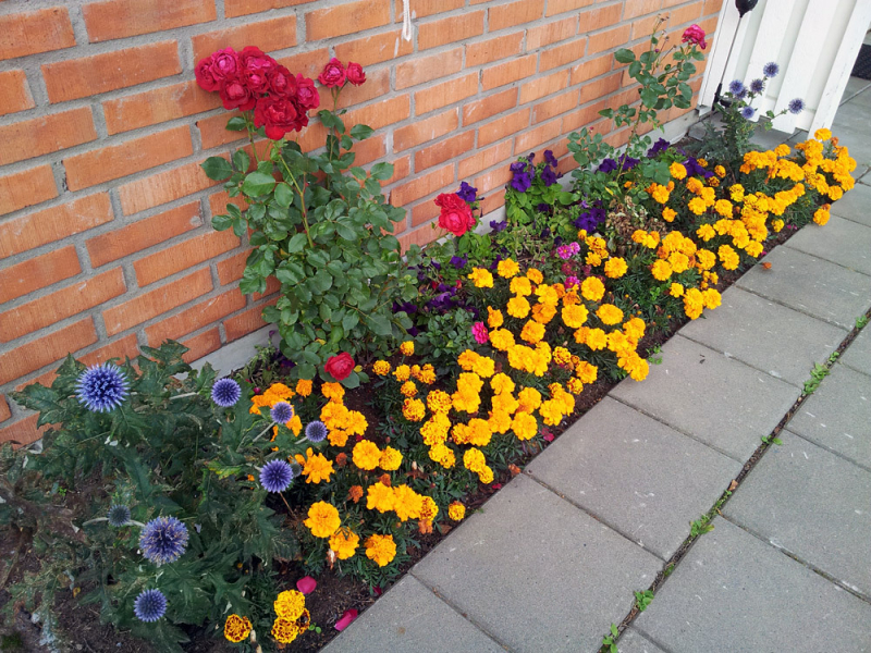 Imaginary Karin - flower bed