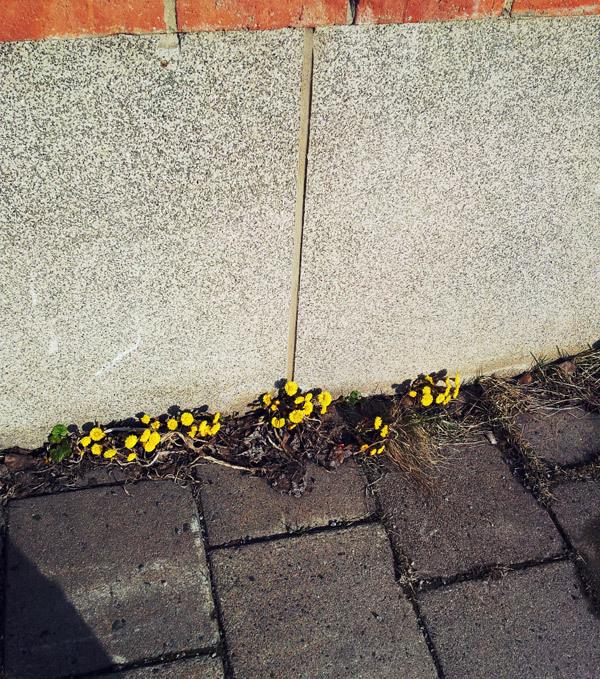 Imaginary Karin - spring flowers 2012
