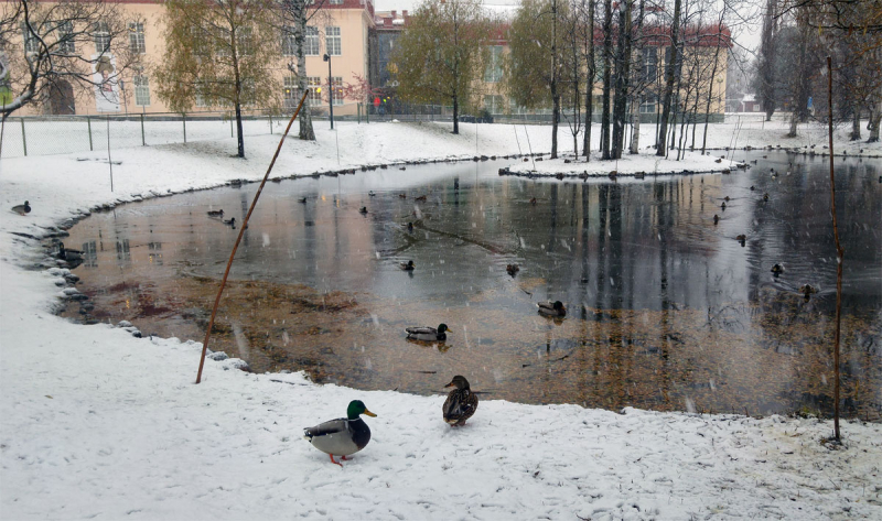 Imaginary Karin - duck pond first snow 2016