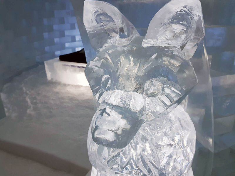 Ice sculpture of a fox inside Icehotel