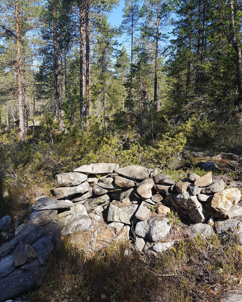 low stone wall in evergreen forest