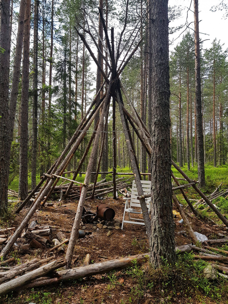 Kåta teepee poles in evergreen forest