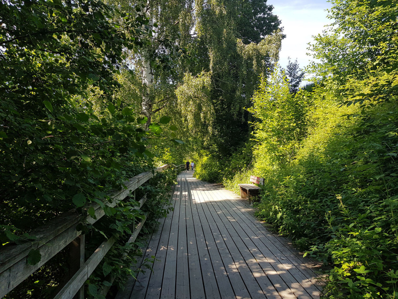 Walkway surrounded by greenery