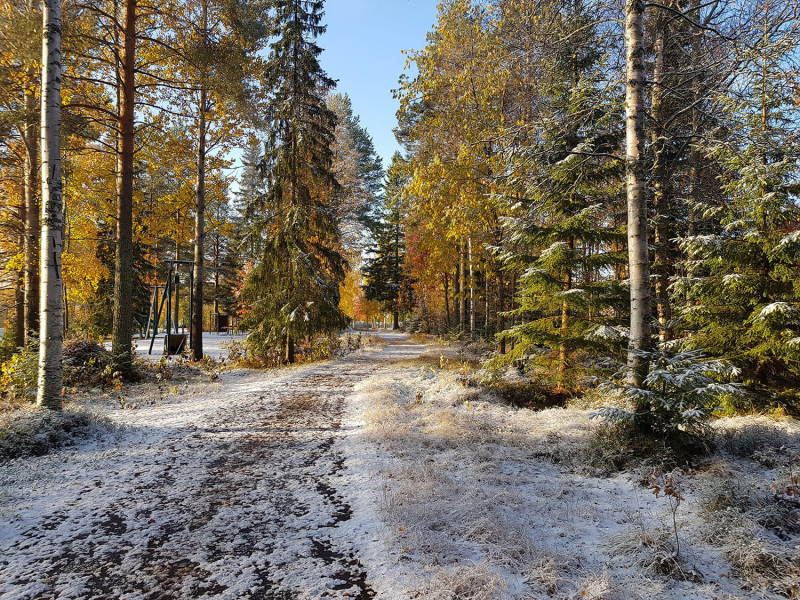 path through forest with light snow