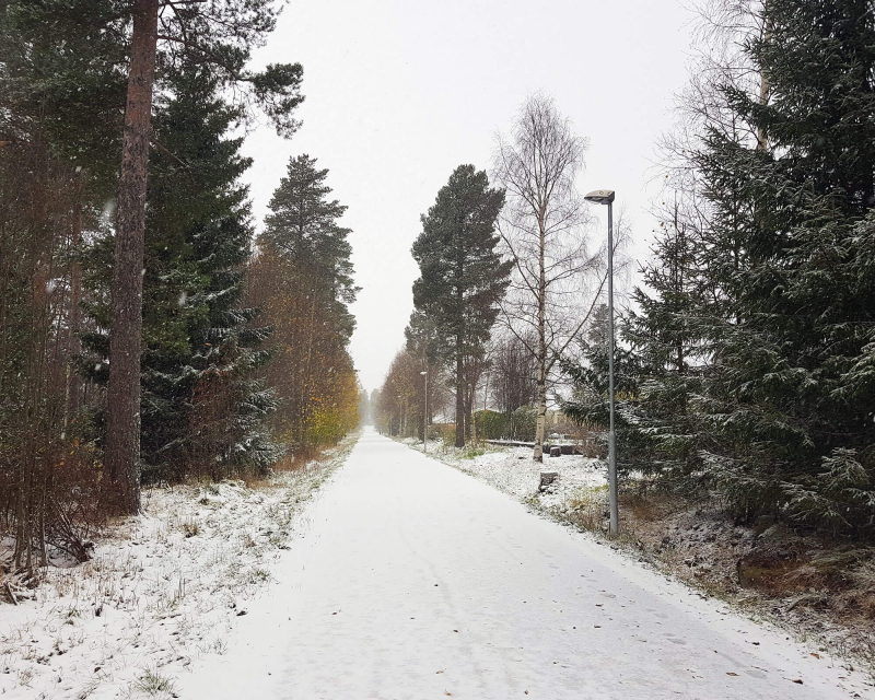 Snowy road with trees on both sides