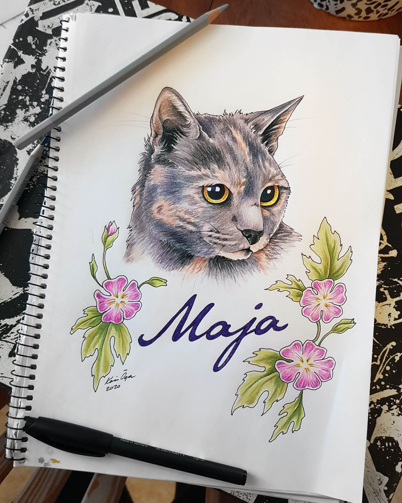 Coloured pencil drawing of a tortoiseshell cat's head
