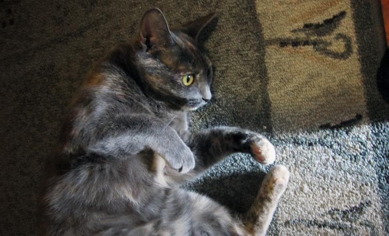 Imaginary Karin - Maja the cat