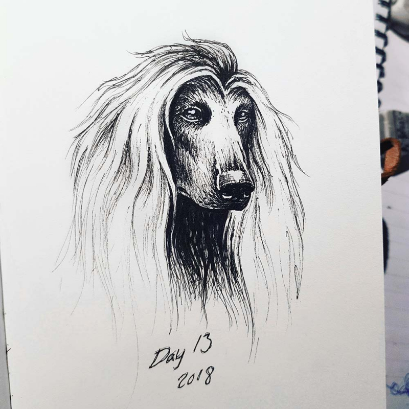afghan hound drawing