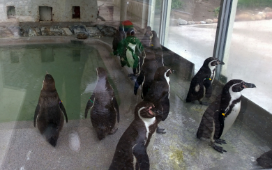 Imaginary Karin - Gothenburg penguins