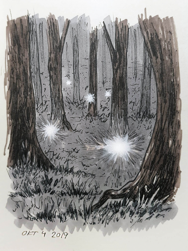 drawing of light orbs in a forest