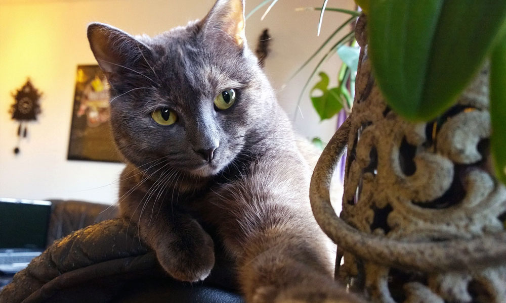 Grey cat laying next to a potted plant