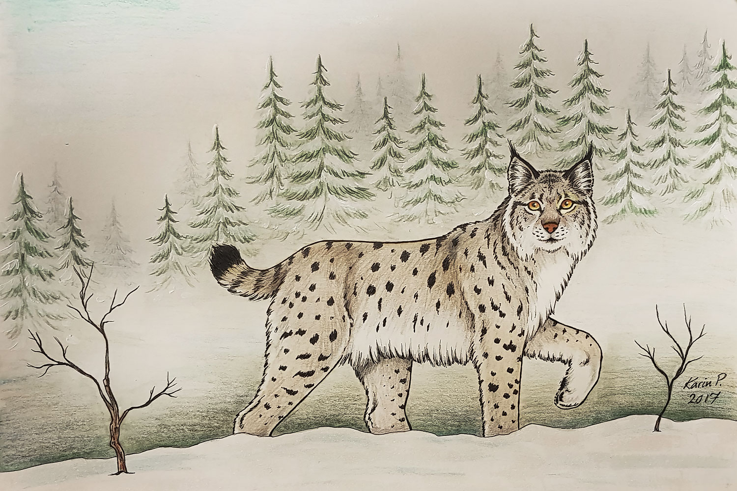 Drawing of lynx in winter landscape