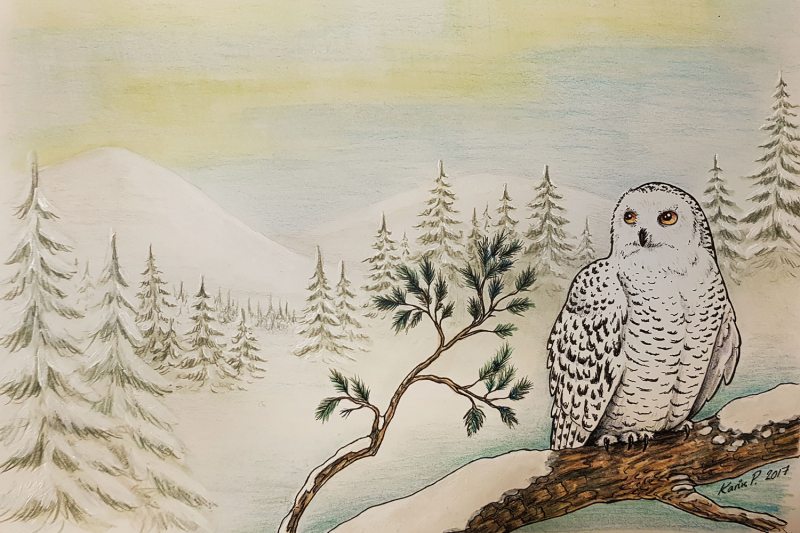Drawing of snowy owl in winter landscape